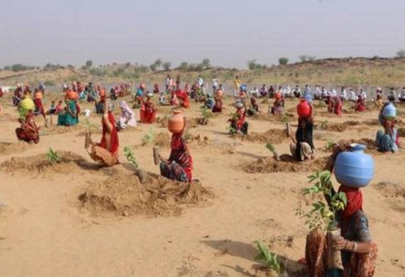 Women in Rajasthan Plant Saplings to Commemorate World Day to Combat Desertification and Drought
